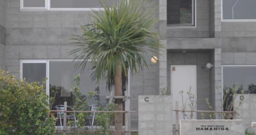 建物前ではヤシの木がお出迎え。