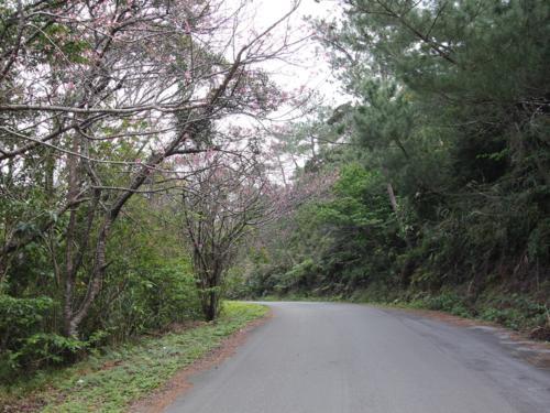 物件にたどり着く手前に桜の木が立ち並ぶ道路がございます!